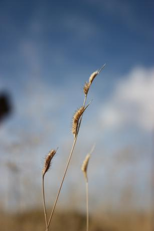 Learn how to utilize and cultivate native grasses, such as Hairy Grama, to help control erosion.